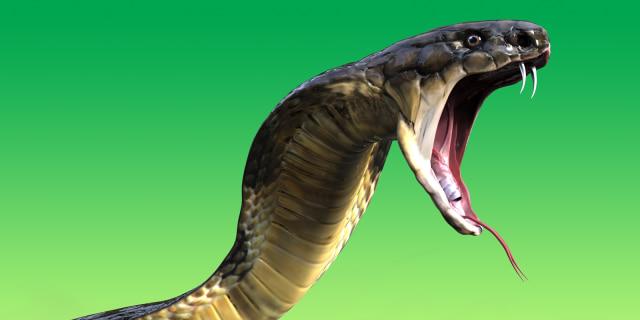 Deretan Penemuan Ular Kobra di Jakarta  (247868)