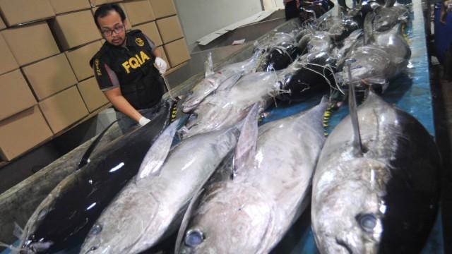 Pengecekan Ikan Tuna