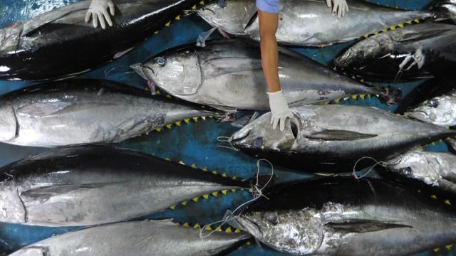7 Jenis Ikan Lokal Kaya Nutrisi yang Baik Dikonsumsi Setiap Hari (434217)
