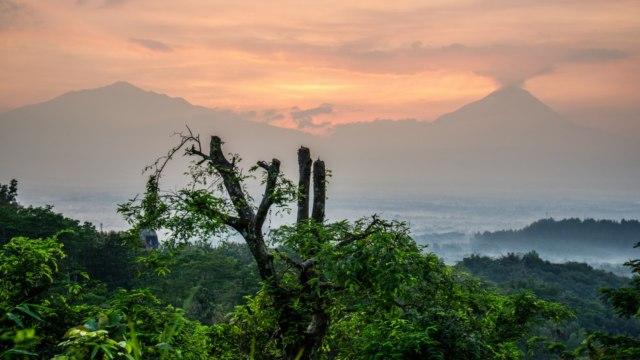 Melihat Kondisi Gunung Merbabu Sebelum dan Setelah Terbakar (982159)