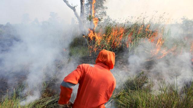 Gubernur Riau Instruksikan Kerahkan Kekuatan Penuh Tangani Karhutla (938247)