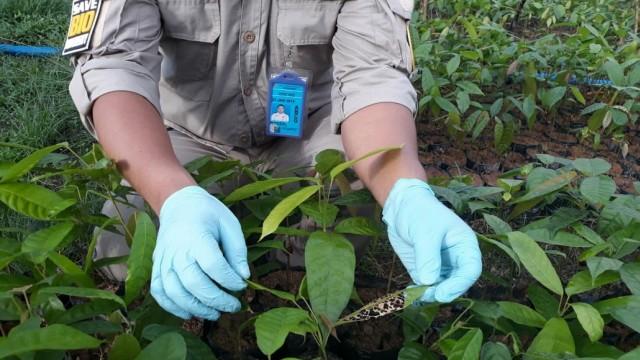 Kadin: Investasi di Perkebunan Kakao Masih Kecil (276436)