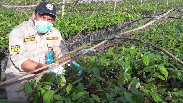 Kadin: Investasi di Perkebunan Kakao Masih Kecil (276437)
