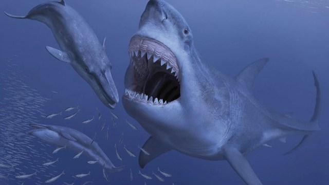 Unduh 6000 Gambar Ikan Hiu Raksasa Terpopuler
