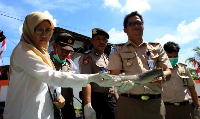 21 Ekor Ikan Invasif dan Berbahaya Dimusnahkan, Ada Piranha (28662)