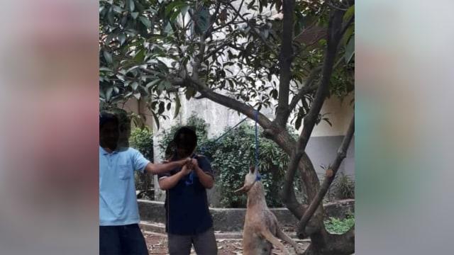 Pembunuhan anjing di kampus swasta di Jakarta