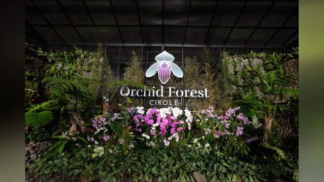 Orchid Forest Cikole, Wisata Bandung yang Tak Sengaja Instagramable (168602)