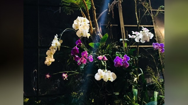Orchid Forest Cikole, Wisata Bandung yang Tak Sengaja Instagramable (168606)