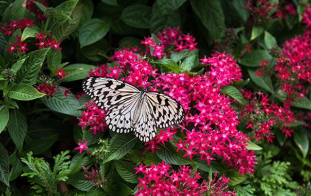 Butterfly Garden di Changi International Airport