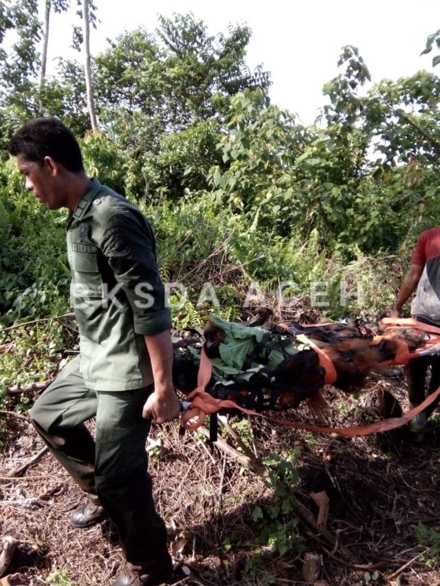 BKSDA Selamatkan M Salah dari Rawa Gambut Tripa, Kabupaten Aceh Barat Daya (Abdya), Minggu (2/9).