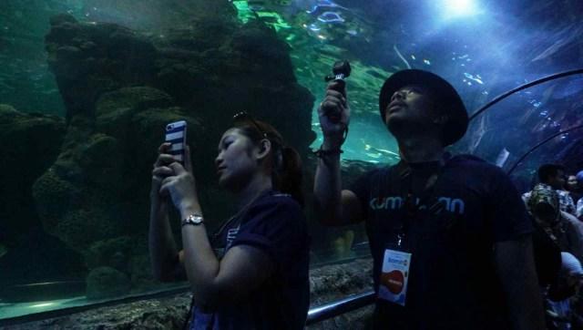 Para peserta komit up kumparan berkunjung ke Sea World Akuarium, Ancol.