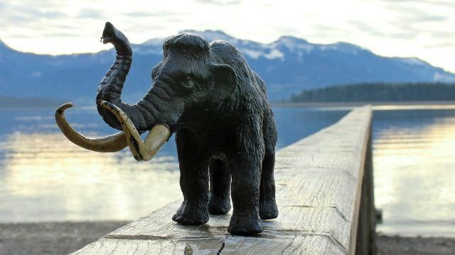 Ilustrasi Gajah Mammoth