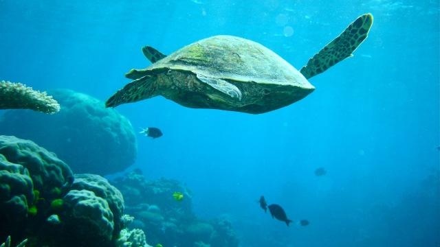 Great Barrier Reef di Australia