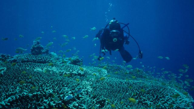 Menyelam di lautan Pulau Cebu, Filipina