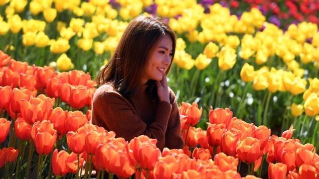 Yuk Tiru Cara Belanda Lindungi Bunga Tulip Dari Selfie Wisatawan Kumparan Com