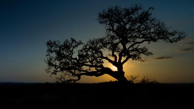 Rp 10 Miliar vs Pohon di Hutan, Pilih Mana? (125)