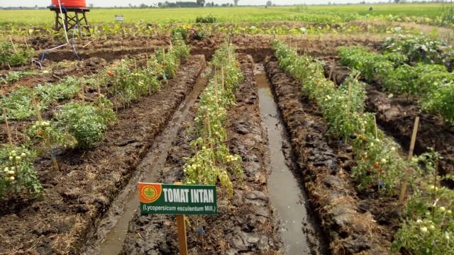 Program Dana Desa Sudah Habiskan Rp 187 Triliun, Dipakai Apa Saja?  (306246)