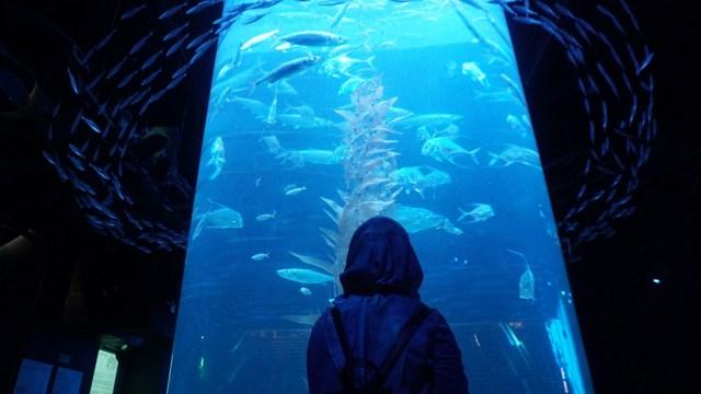 Harga Tiket Masuk Jakarta Aquarium Neo Soho (353220)