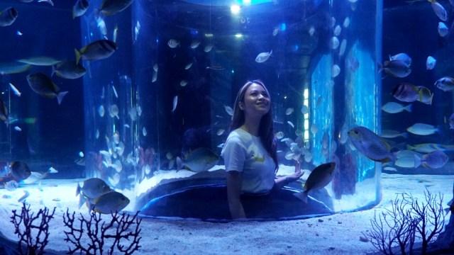 Harga Tiket Masuk Jakarta Aquarium Neo Soho (353221)