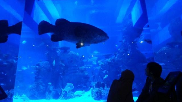 Harga Tiket Masuk Jakarta Aquarium Maret 2021, Beserta Jam Bukanya (11969)