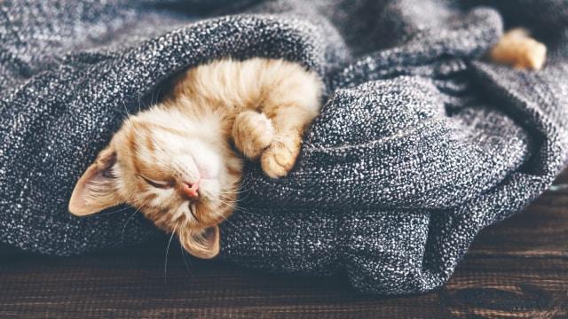 Kisah Kucing Tergiling di Mesin Cuci karena Tidur Siang Sembarangan (2)