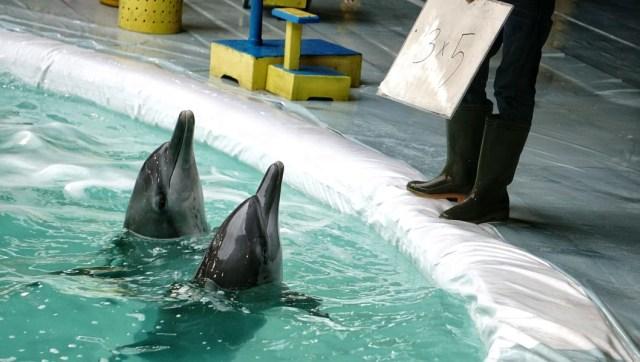 Resmi, Sirkus Lumba-lumba Keliling Dilarang per 6 Februari 2020 (537604)