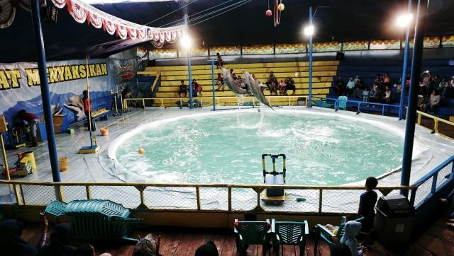 konten spesial, sirkus lumba-lumba, Depok