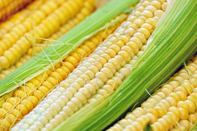 Ilustrasi jagung