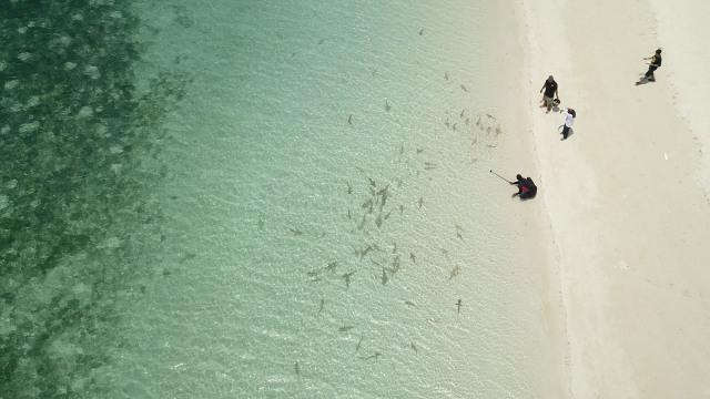 konten spesial, Taman Nasional Taka Bonerate, terumbu karang