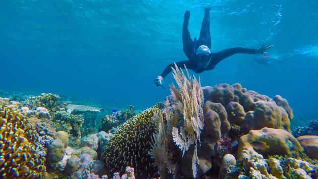 Keindahan bawah laut Pulau Tinabo