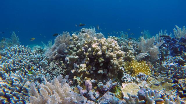 Keindahan Bawah Laut Takabonerate