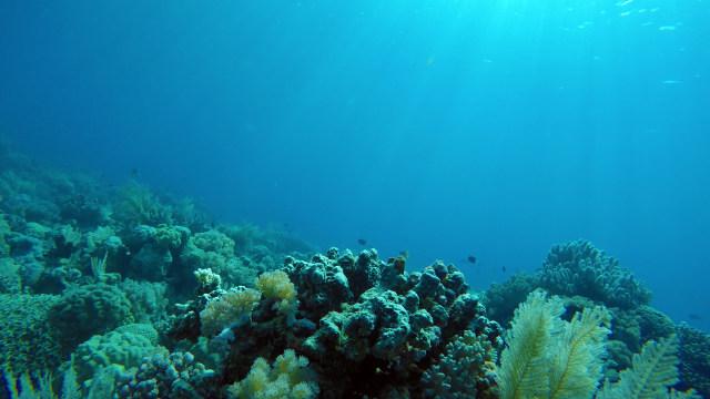 Terumbu karang di Taman Nasional Takabonerate