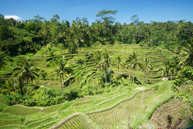 Kemenkumham Usut WN AS yang Viral Ajak WNA Pindah ke Bali Saat Pandemi Corona  (62240)
