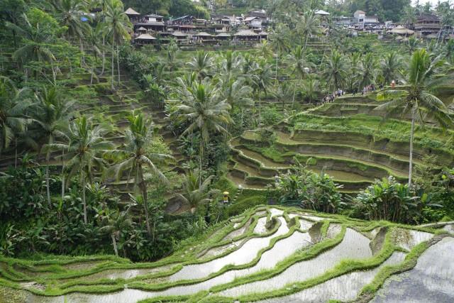 Mentan: Alsintan Bantu Tingkatkan Produktivitas Petani Bali (305214)