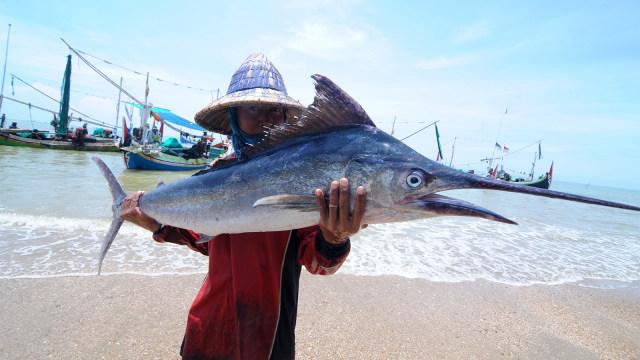 Nelayan, ikan layar