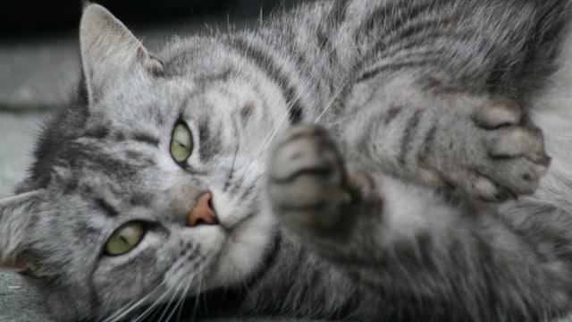 Unduh 101+  Gambar Kucing Cuek Lucu Gratis