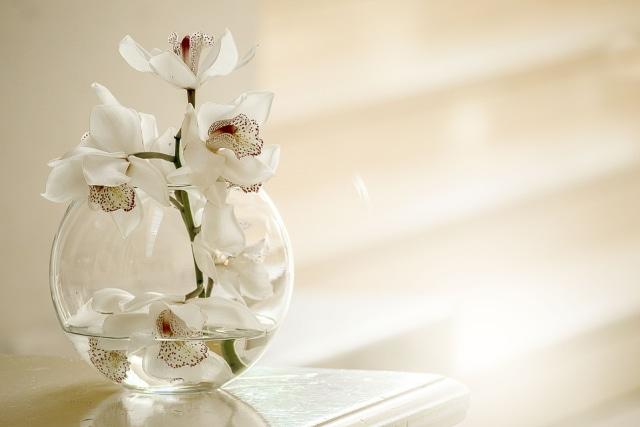 Tips Dekorasi: 5 Tanaman Hias untuk Meja Kerja Agar Tampak Manis  (4365)
