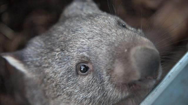 77 Gambar Hewan Khas Australia Gratis Terbaik