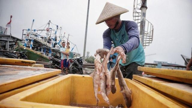 Nelayan Bongkar Hasil Tangkapan Ikan