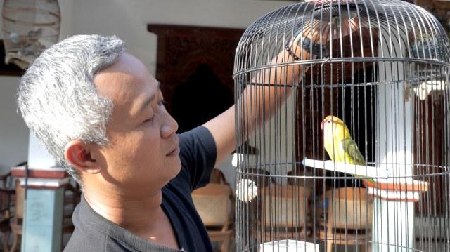 FOTO LIPSUS LOVEBIRD KUSUMO, Sigit Marwanta dan salah satu koleksi lovebirdnya
