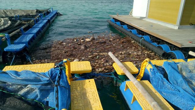 Pencemaran sampah di perairan Pulau Pari
