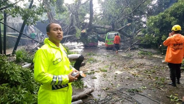 Puting Beliung di Kota Bogor, 4 Kendaraan Rusak Tertimpa Pohon (66428)