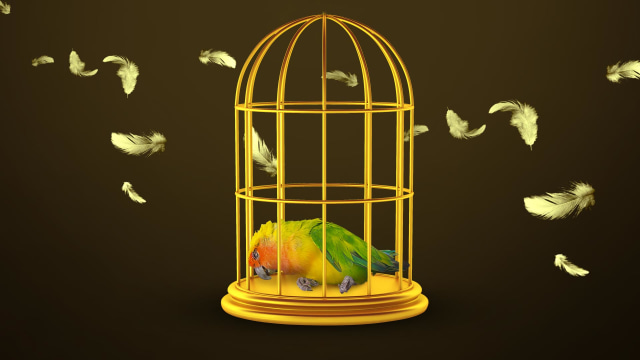 Matinya Lovebird Kusumo