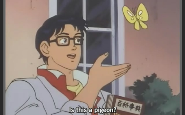 Meme Is this a Pigeon?