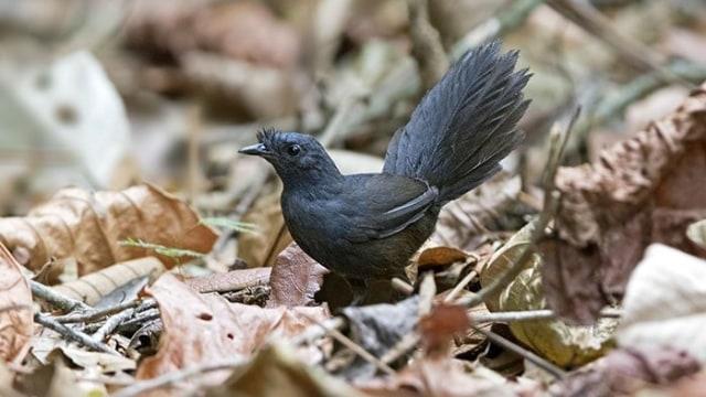 Wow 30+ Gambar Burung Langka - Gani Gambar