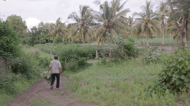 LIPSUS AGRARIA, Lahan sengketa Masyarakat-TNI AD, Urutsewu, Kebumen