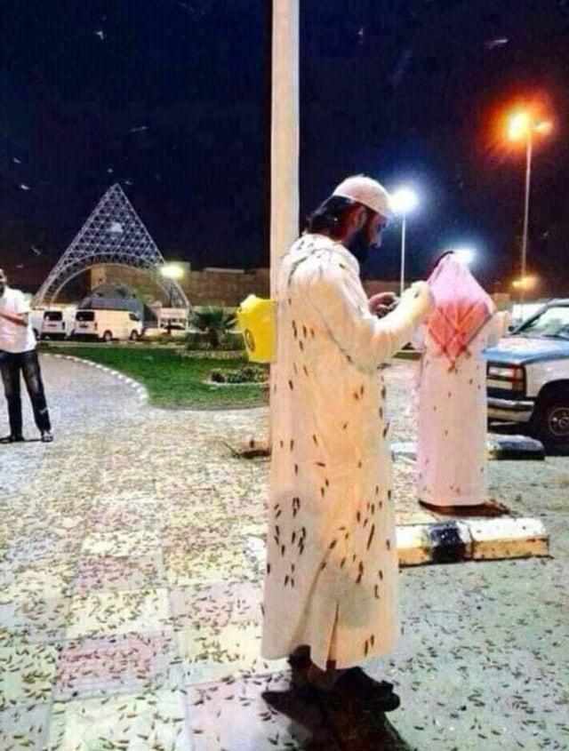jangkrik di Masjidil haram