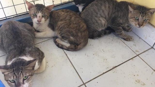Menerka Jumlah Kucing di Jakarta hingga Tahun 2021 (208038)