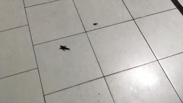 Masjidil Haram bersih dari jangkrik dan belalang