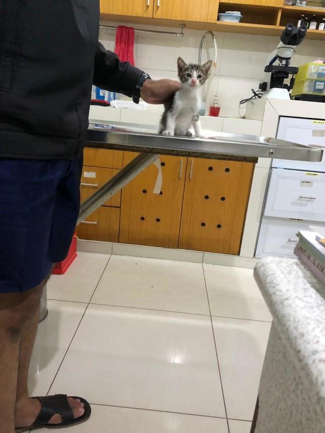 Mengenal FPV, Virus Paling Mematikan pada Kucing (68601)